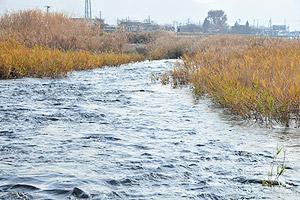 馬見ヶ崎川の写真