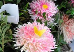 笹野花の写真